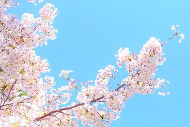 春ページへ。桜のバナー